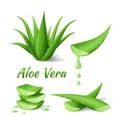 Set of Aloe Vera, Can Aloe Vera Help Alopecia Areata, leaves and cut pieces
