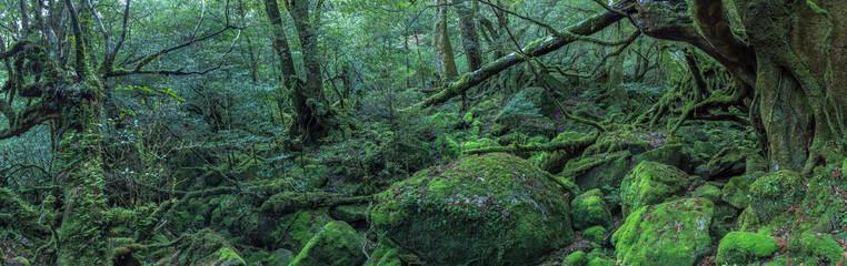 鹿児島県・屋久島 苔むす森 パノラマ