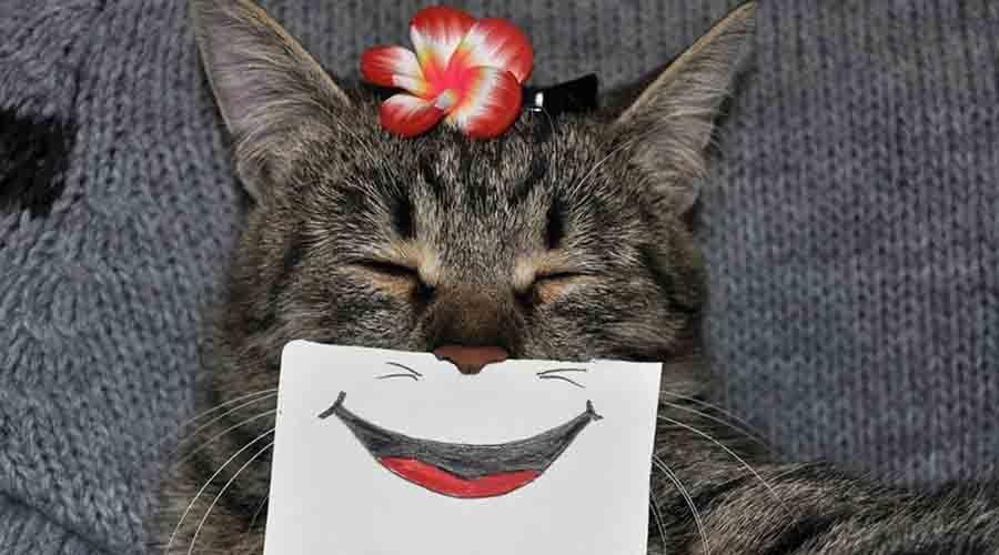 Koleksi Foto Dan Gambar Kucing Lucu Gemesin Terbaru