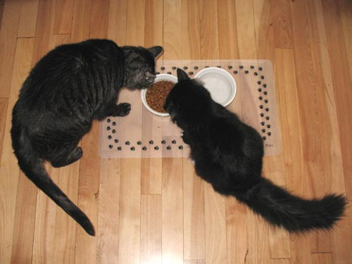 Swizzle and Wizard sharing the foodbowl