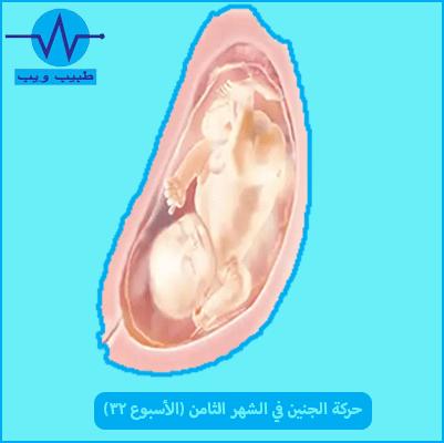 حركة الجنين في الشهر الثامن (الأسبوع 32) بالصور