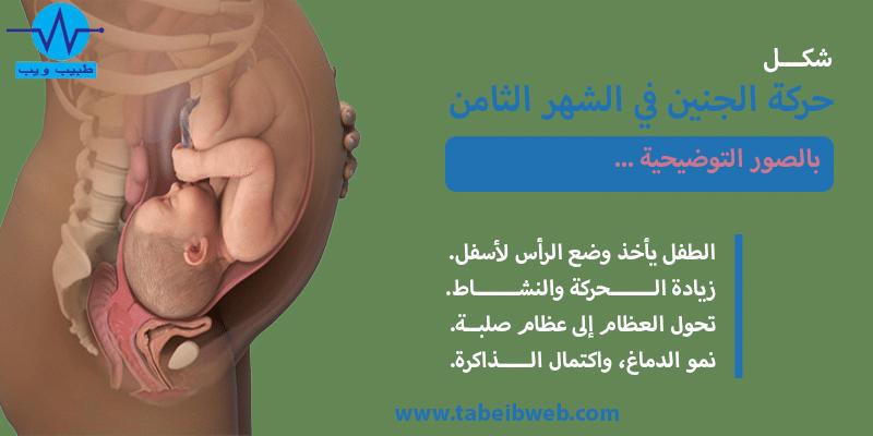 حركة الجنين في الشهر الثامن بالصور طبيب ويب
