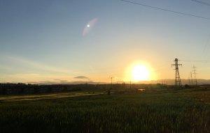 麦畑に上る朝日