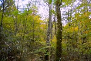 段戸裏谷原生林きららの森