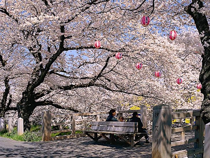 伊賀川桜堤