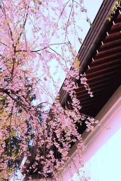 角館武家屋敷通り(仙北市角館重要伝統的建造物群保存地区)