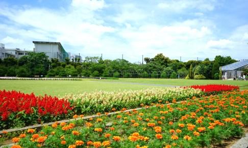 神奈川県立大船フラワーセンター