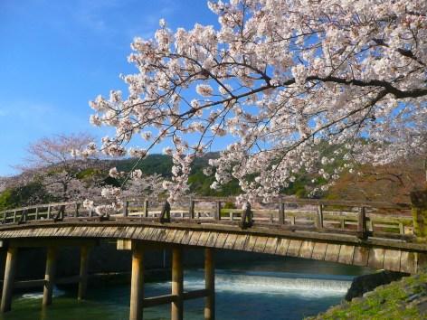 渡月橋・春