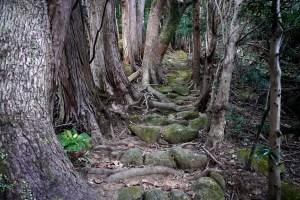 熊野古道伊勢路 曽根次郎坂・太郎坂