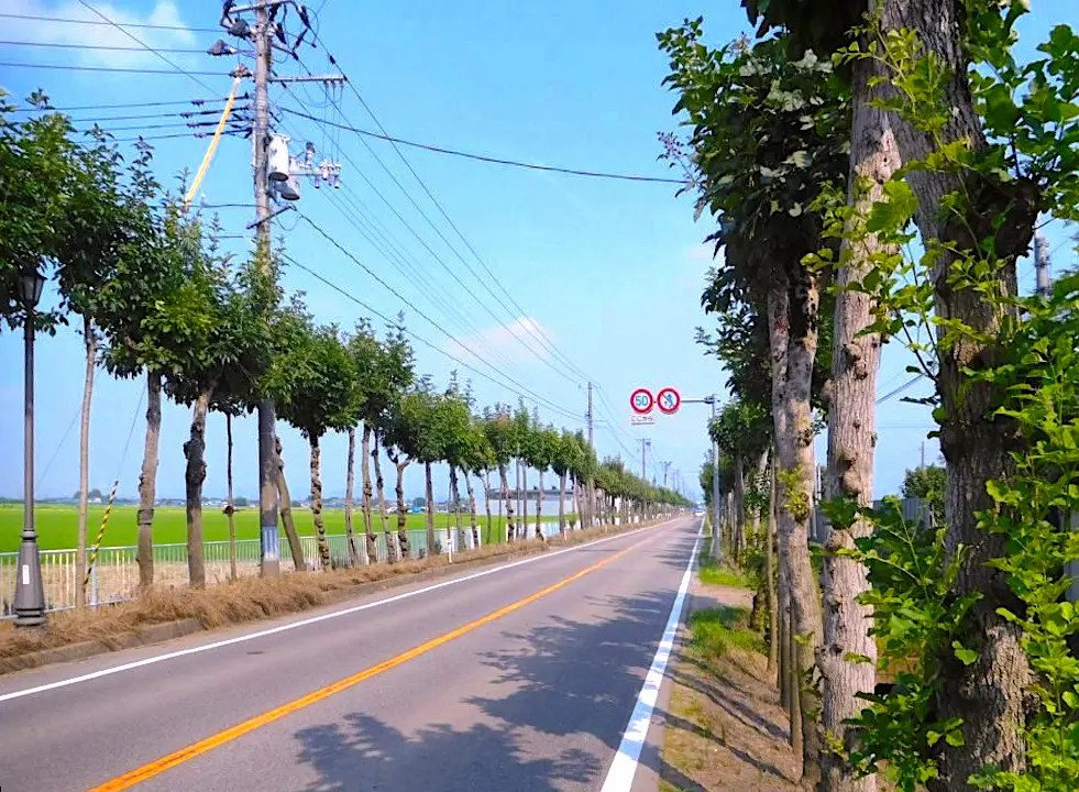 富山県道251号本保福岡線