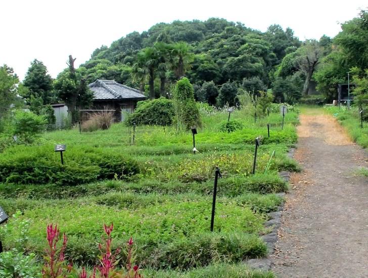 旧島原藩薬園跡
