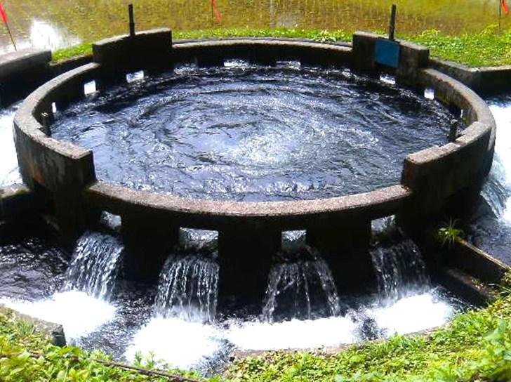 音無井路円形分水