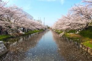 葛西用水桜並木