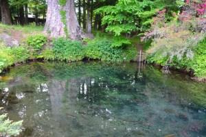 忍野八海・底抜池