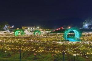 茨城県フラワーパーク『イルミネーション』