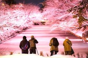 弘前公園『冬に咲くさくらライトアップ』