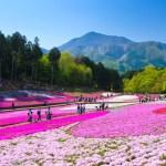 羊山公園芝桜の丘『芝桜まつり』
