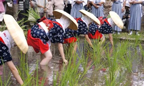 伊佐須美神社『御田植祭』