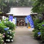 磯山神社『あじさい祭り』