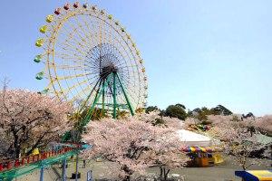 華蔵寺公園花まつり