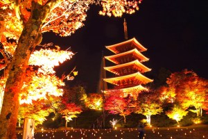 成相寺特別拝観と紅葉ライトアップ