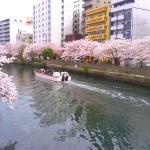 大岡川桜まつり