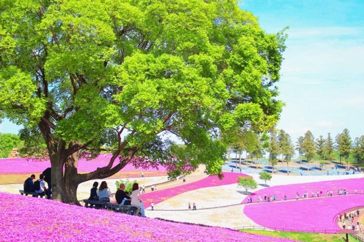 おおた芝桜まつり
