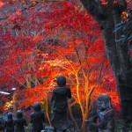 大山寺・大山阿夫利神社下社『紅葉ライトアップ』