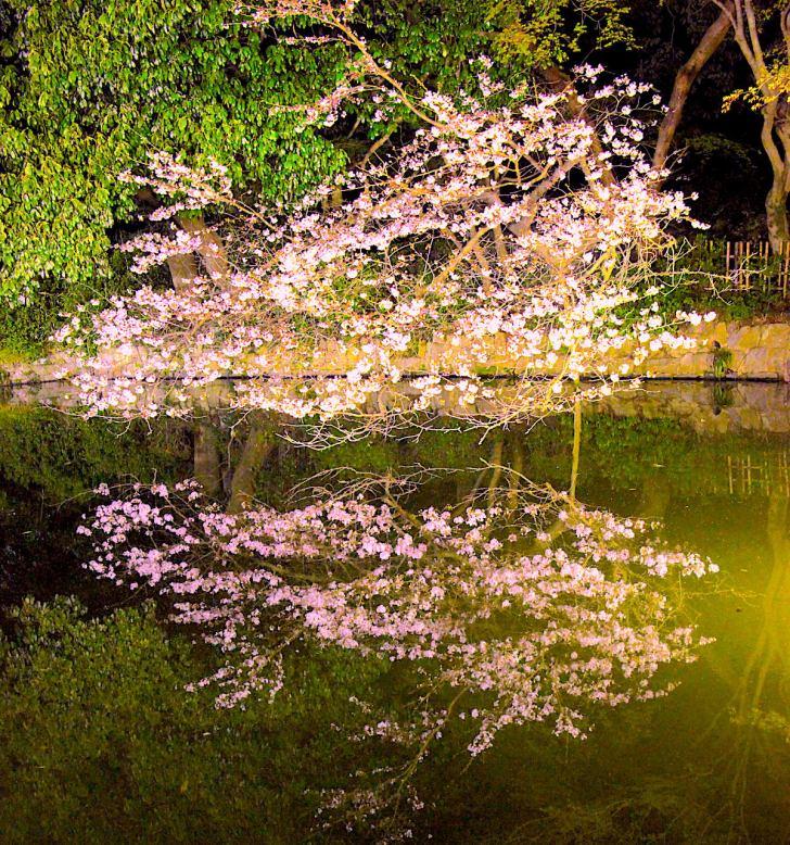 栗林公園『春のライトアップ』