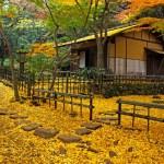 三溪園『紅葉の古建築公開』
