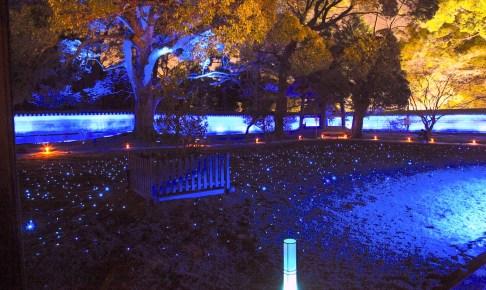 青蓮院門跡『夜の特別拝観 ライトアップ』