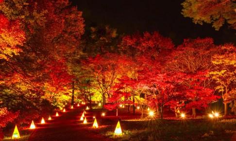 国営武蔵丘陵森林公園『紅葉ライトアップ&イルミネーション~』