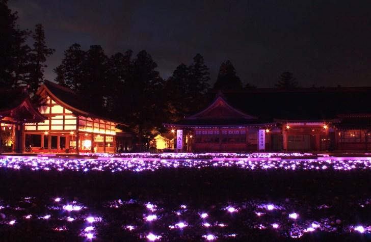 多賀大社『神あかり』(紅葉ライトアップ)