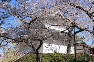 土浦桜まつり