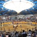 定期闘牛大会和霊大祭場所