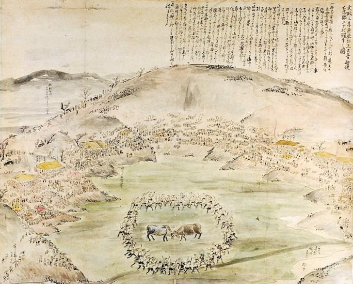 越後山古志の闘牛大会(牛の角突き)