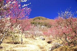 湯河原梅林梅の宴