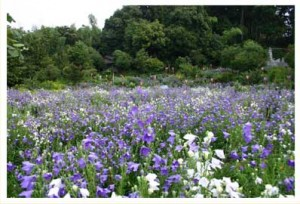 ききょう園