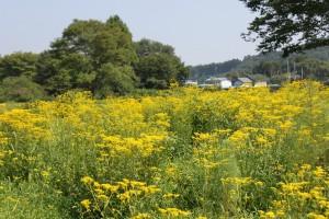 野の花自然園