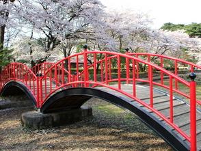 烏ケ森公園桜