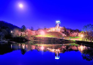 東明公園桜