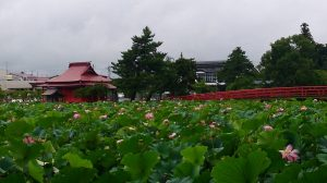 猿賀神社蓮池