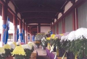 市原市文化祭菊花展