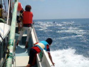 あしずり漁業体験くらぶホエールウォッチング