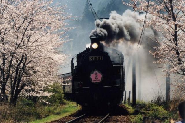 川根町 桜トンネル