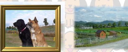 片山農園OKドッグラン