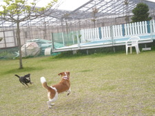 Dog Run Okinawa