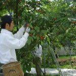 たきぐち果樹園