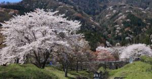 霞間ケ渓桜