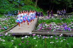 西の久保公園花菖蒲